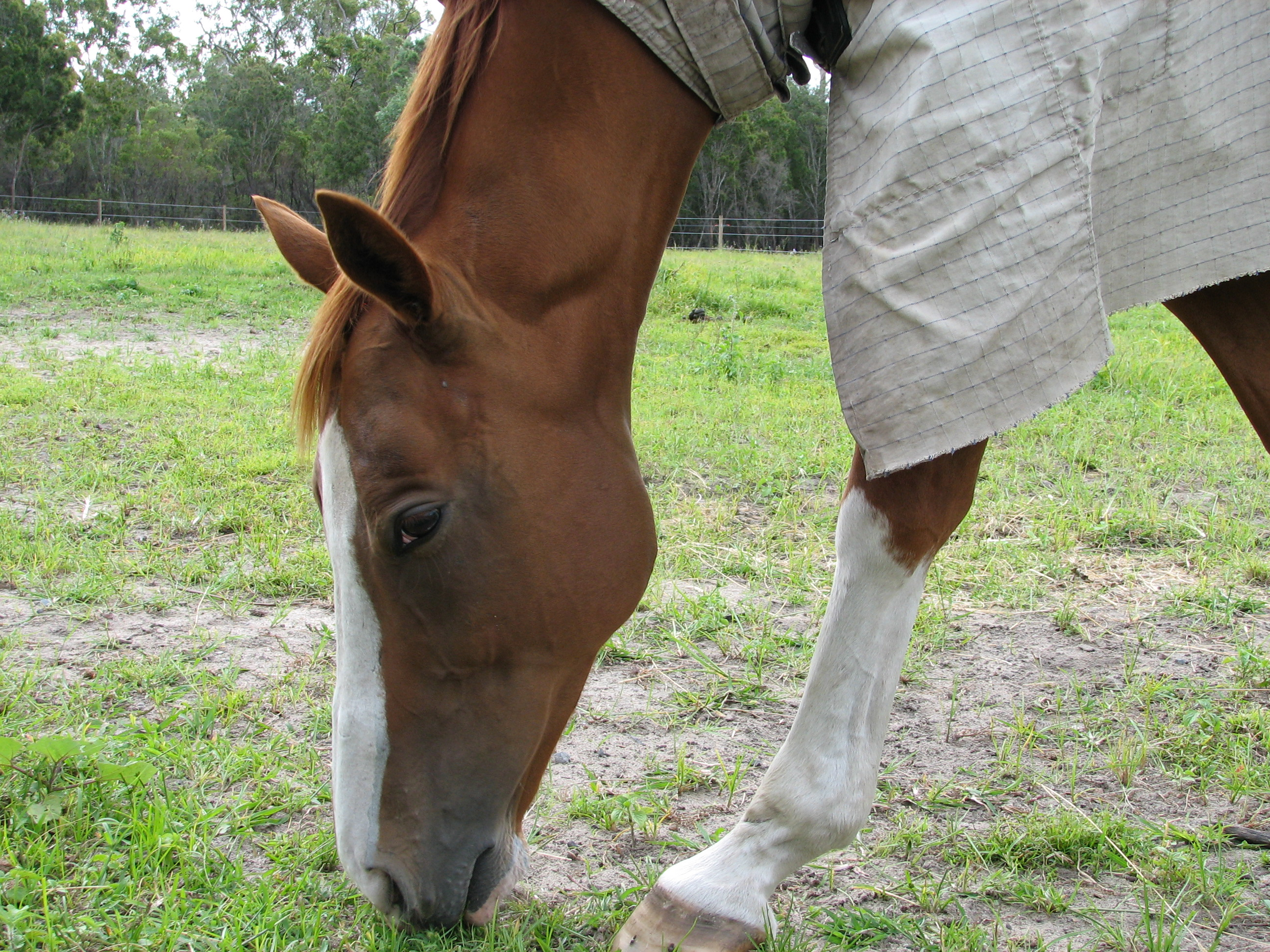 an analysis of the equine herpes virus 1 in horses