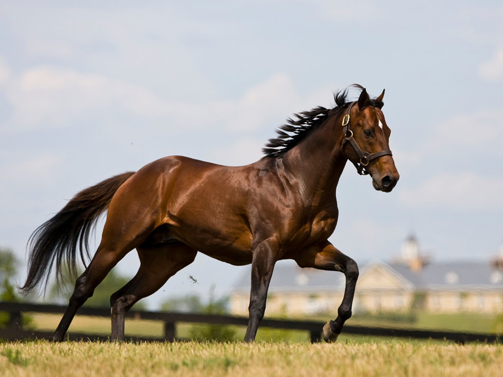 horsebreedsinfo.com