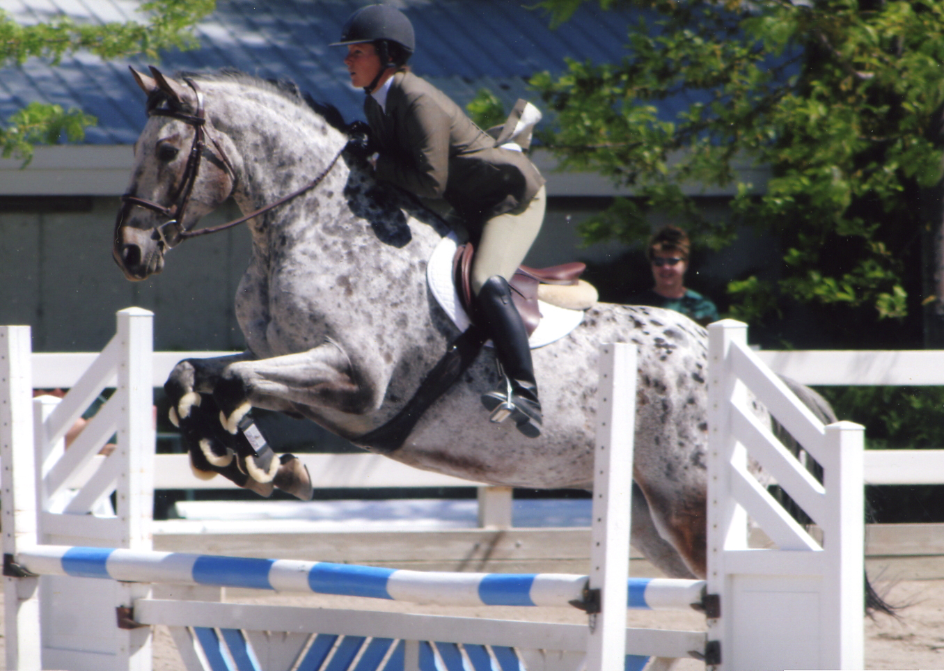 Horseback Riding Jumping
